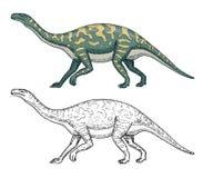 Dinosaurs Barosaurus, Apatosaurus, Tenontosaurus Plateosaurus, broad lizard, Massospondylus, Diplodocus, Brachiosaurus. Skeletons fossils Prehistoric reptiles Stock Images