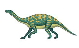 Dinosaurs Barosaurus, Apatosaurus, Tenontosaurus Plateosaurus, broad lizard, Massospondylus, Diplodocus, Brachiosaurus. Skeletons fossils Prehistoric reptiles Stock Image