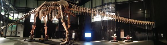 Dinosaurs exhibition. Skeletons and models of dinosaurs found in Argentina Royalty Free Stock Photo