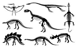 Dinosaurs and Fossils skeleton Royalty Free Stock Image