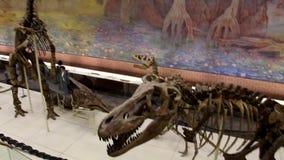 Dinosaurs in full growth. Dinosaur bones. Moscow, RF - 05.12.2019: Dinosaur skeletons in the Museum of Paleontology in Moscow. Dinosaurs in full growth stock video footage