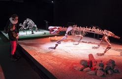 Dinosaurs skeleton adn visitors Royalty Free Stock Image