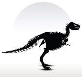 Dinosaurs trex skeleton Stock Images
