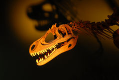 dinosaurskelett Royaltyfri Fotografi