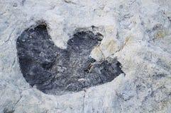 dinosaurspår arkivbilder