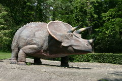 dinosaurstriceratops Royaltyfria Foton