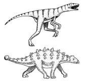 Dinosaurus Ankylosaurus, Talarurus, Velociraptor, Euoplocephalus, Saltasaurus, skeletten, fossielen Voorhistorische reptielen stock illustratie