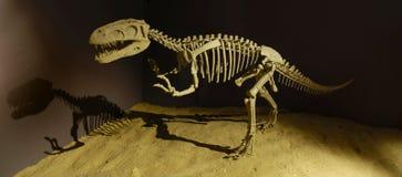 Dinosaurus in het Museum Stock Foto's