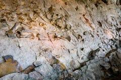 Dinosaurus Nationaal Monument royalty-vrije stock foto