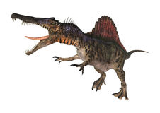 Dinosaurus Spinosaurus Stock Afbeelding