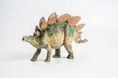 Dinosaurus, Stegosaurus op witte achtergrond royalty-vrije stock fotografie