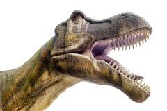 Dinosaurus t -t-rex Royalty-vrije Stock Foto