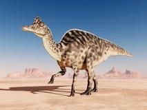 Dinosaurus Velafrons Royalty-vrije Stock Afbeelding