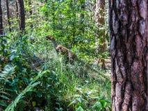 dinosaurus in veren in het bos wordt behandeld dat stock fotografie