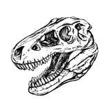 Dinosaurushoofd van turexschedel royalty-vrije illustratie