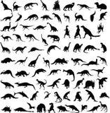 Dinosaurussen. Stock Foto's