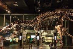 Dinosaurustentoongesteld voorwerp bij Koninklijk Tyrrell-Museum in Drumheller, Canada Stock Afbeelding