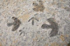 Dinosaurusvoetafdrukken royalty-vrije stock afbeeldingen