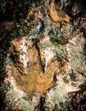 Dinosaurusvoetafdrukken Royalty-vrije Stock Fotografie