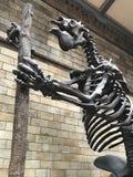 dinosaury fotografia royalty free
