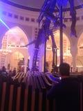 Dinosour real en la alameda de Dubai Fotos de archivo
