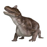 Dinossauro Keratocephalus Foto de Stock