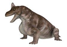 Dinossauro Keratocephalus Fotos de Stock Royalty Free