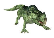 dinossauro Protoceratops da rendição 3D no branco Fotos de Stock