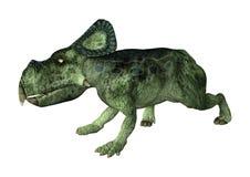 dinossauro Protoceratops da rendição 3D no branco Foto de Stock Royalty Free
