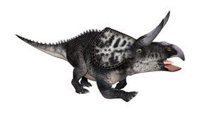 dinossauro Zuniceratops da rendição 3D no branco Fotografia de Stock Royalty Free
