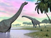 Dinossauros do Brachiosaurus na natureza - 3D rendem Imagens de Stock Royalty Free