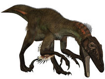 dinozaur ostrommayorum utahraptor 3 d Zdjęcie Royalty Free