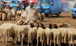 Dinsdag Souk in Azrou, Marokko stock fotografie
