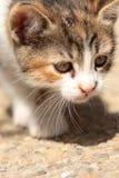 Dintorni d'esplorazione del piccolo giovane gatto fotografia stock