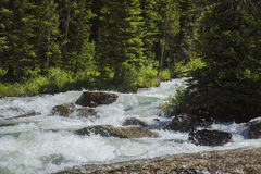Dinwoody Creek Splash Royalty Free Stock Image