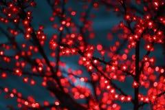 Diodo emissor de luz de Sakura Imagens de Stock Royalty Free