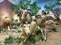 Diorama, das afrikanische Safari Scene kennzeichnet stockfotos