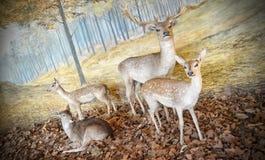 Diorama Of Deers Stock Images