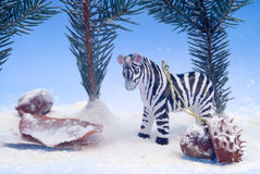 Diorama of zebra Stock Images