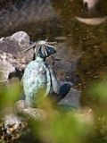 Dios japonés del río de Kappa Tortuga de bronce del vintage en el jard?n japon?s foto de archivo libre de regalías