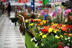 dipartimento del giardino e del fiore in un supermercato immagine stock
