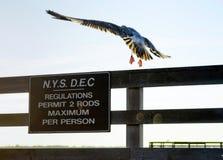 Dipartimento di stato di New York del segno ambientale di conservazione Fotografia Stock