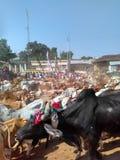 Dipawali Foto de Stock Royalty Free