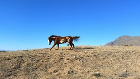 Dipinga i funzionamenti del cavallo su Ridge Fotografia Stock Libera da Diritti