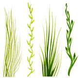Dipinto negli elementi dell'erba verde di gouache su un fondo bianco Illustrazione Vettoriale