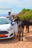 Dipkarpaz,土耳其北赛普勒斯土耳其共和国- 2018年10月3日:支持被打开的汽车的年轻愉快的人与几头野生驴一起 ?treadled 库存图片