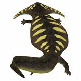 Diplocaulus Amphibian Tail. Diplocaulus was an amphibian that lived in the Permian Period of North America and Africa vector illustration
