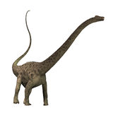 Diplodocus 01 Stockbild