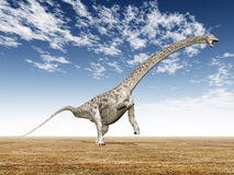 Diplodocus Royalty Free Stock Photos