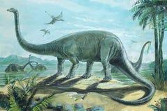 Diplodocus Imágenes de archivo libres de regalías